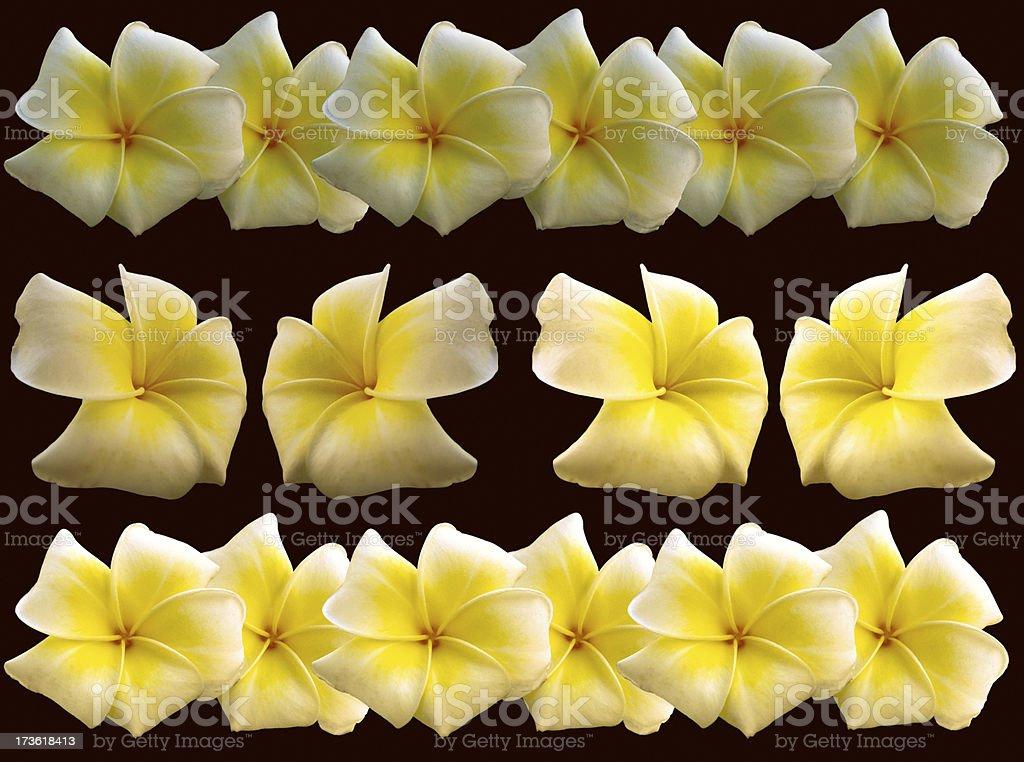 Go Hawai royalty-free stock photo