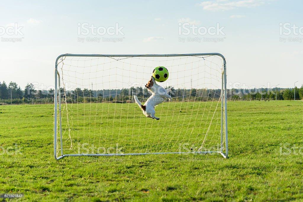 Goalie catching football ball saving goal stock photo