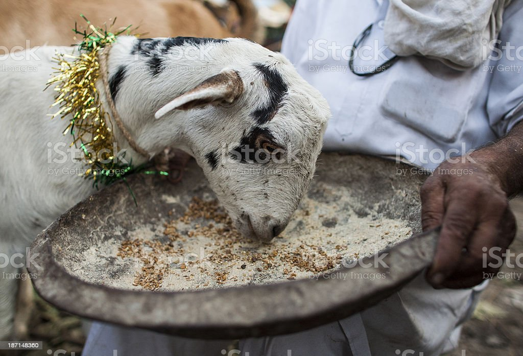 Goat at market stock photo
