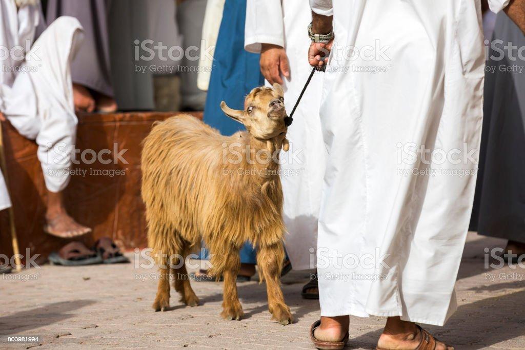 goat at Nizwa market stock photo