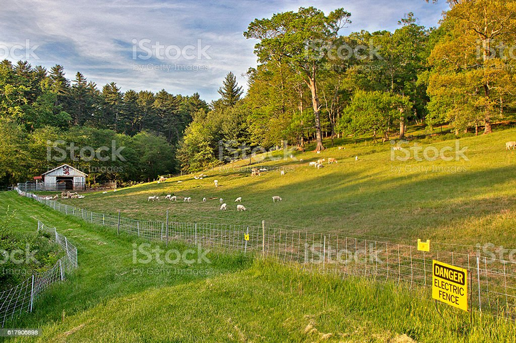 Goat Farm stock photo