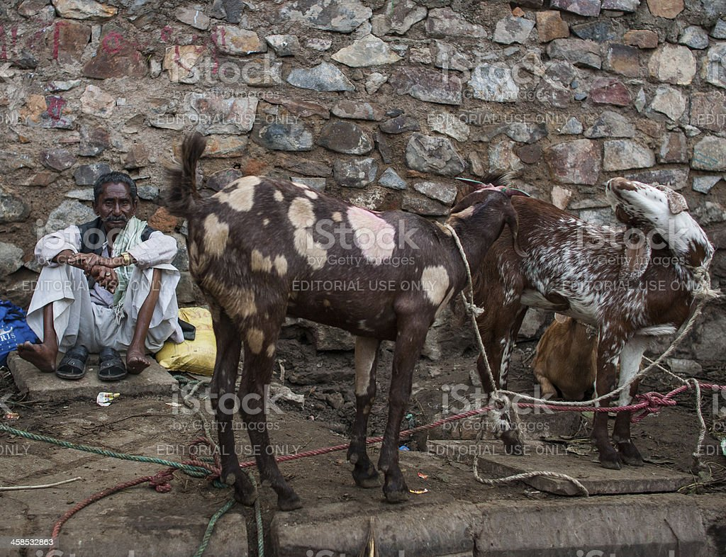 Goat herder rests stock photo