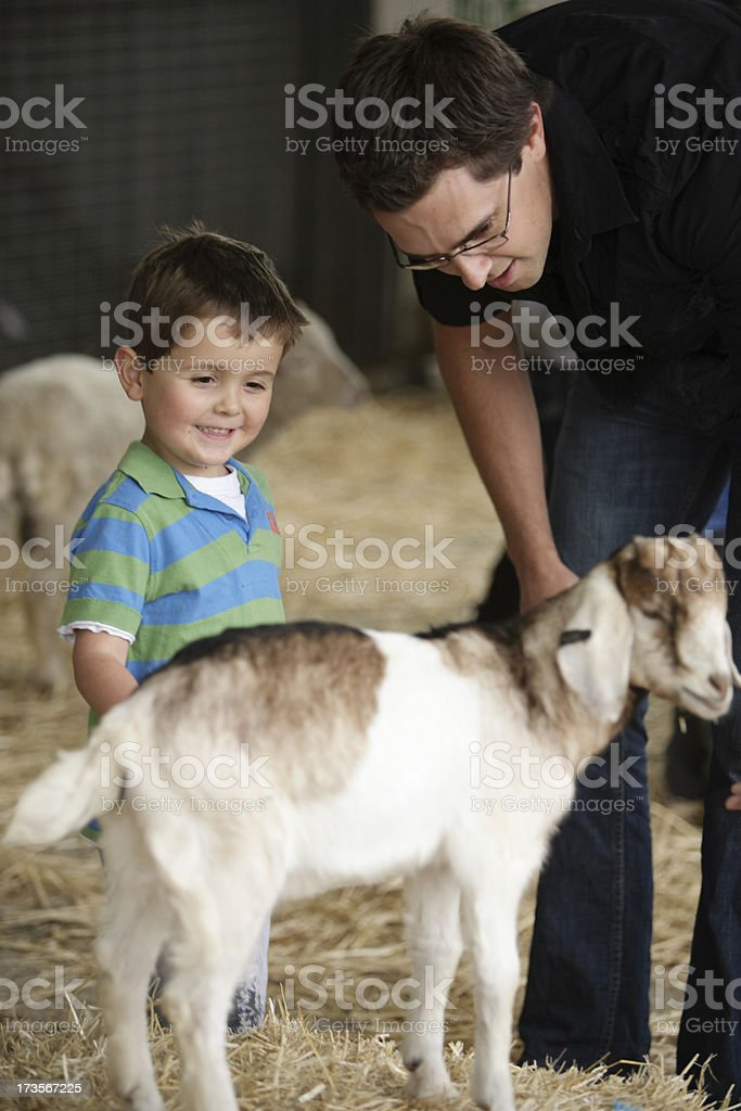 Goat Petting royalty-free stock photo