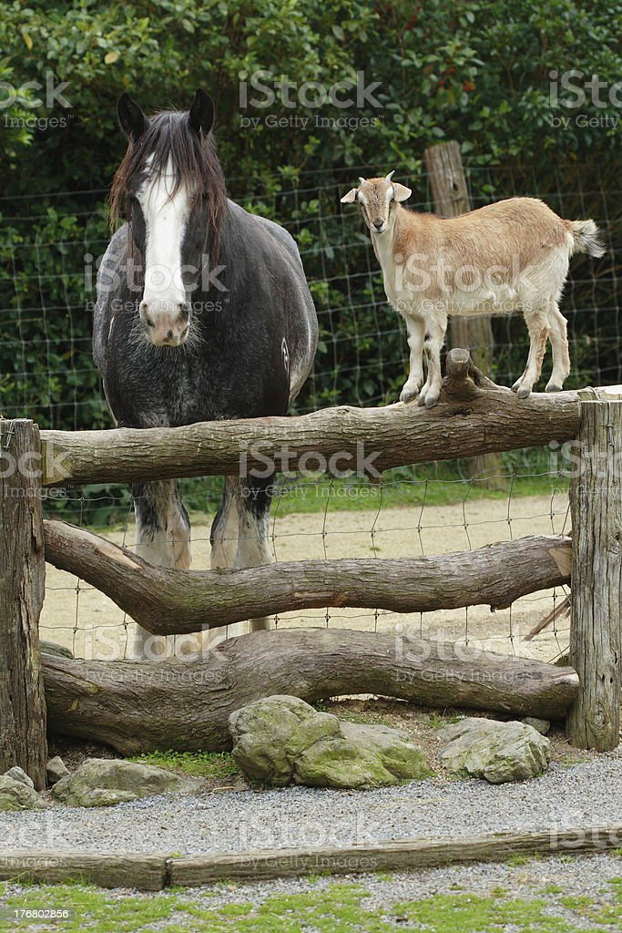 Goat says to the horse... royalty-free stock photo