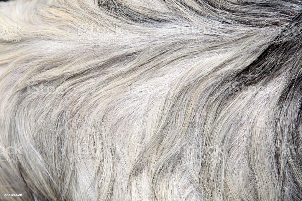 Goat skin stock photo