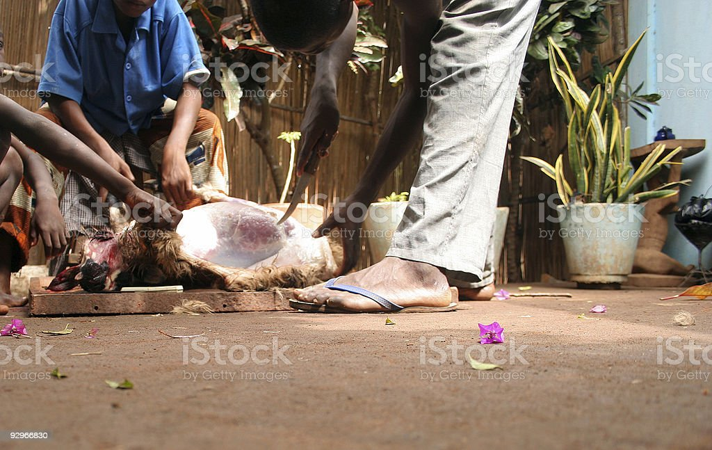 Goat slaughtering. stock photo
