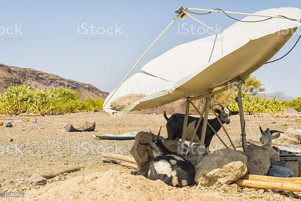 Goats and sattellite dish stock photo