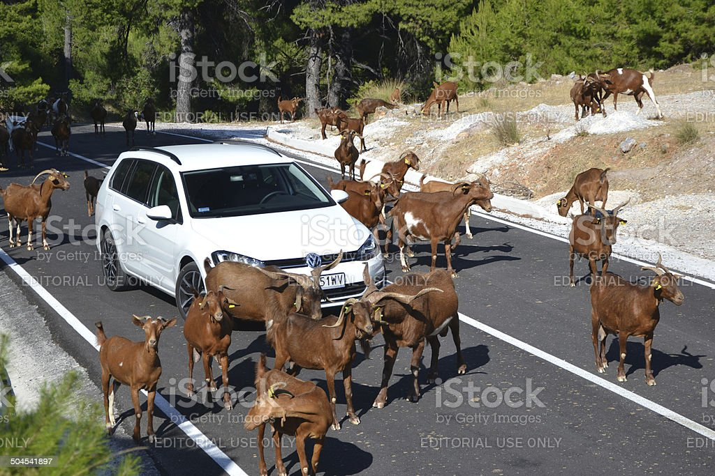 Goats blocking the road on the Skopelos island stock photo