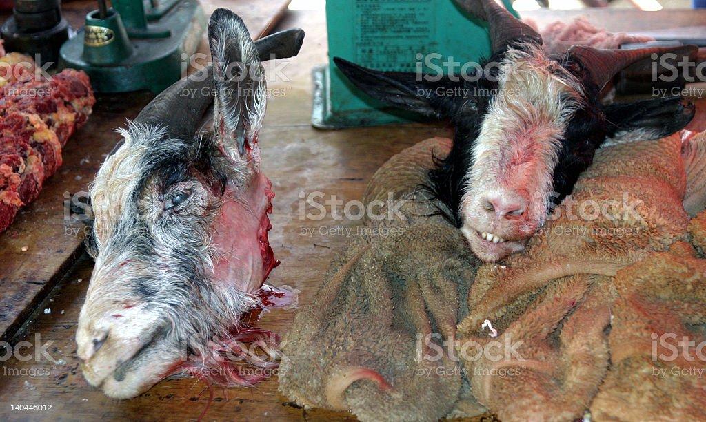 Goats head royalty-free stock photo