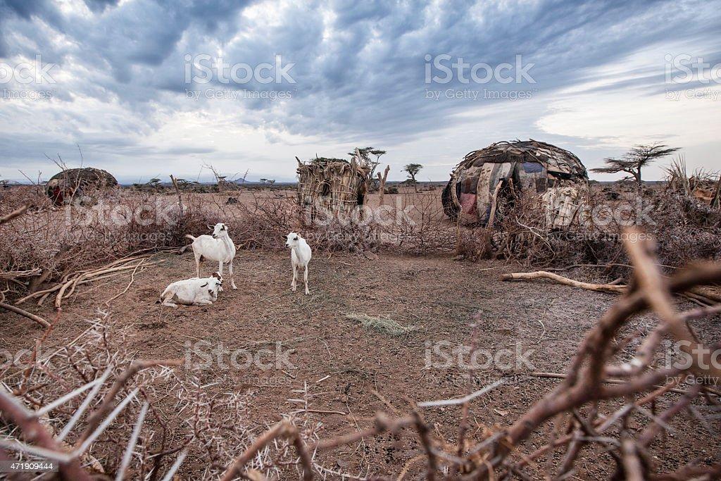 Goats in a Kraal near Loyangalani. stock photo