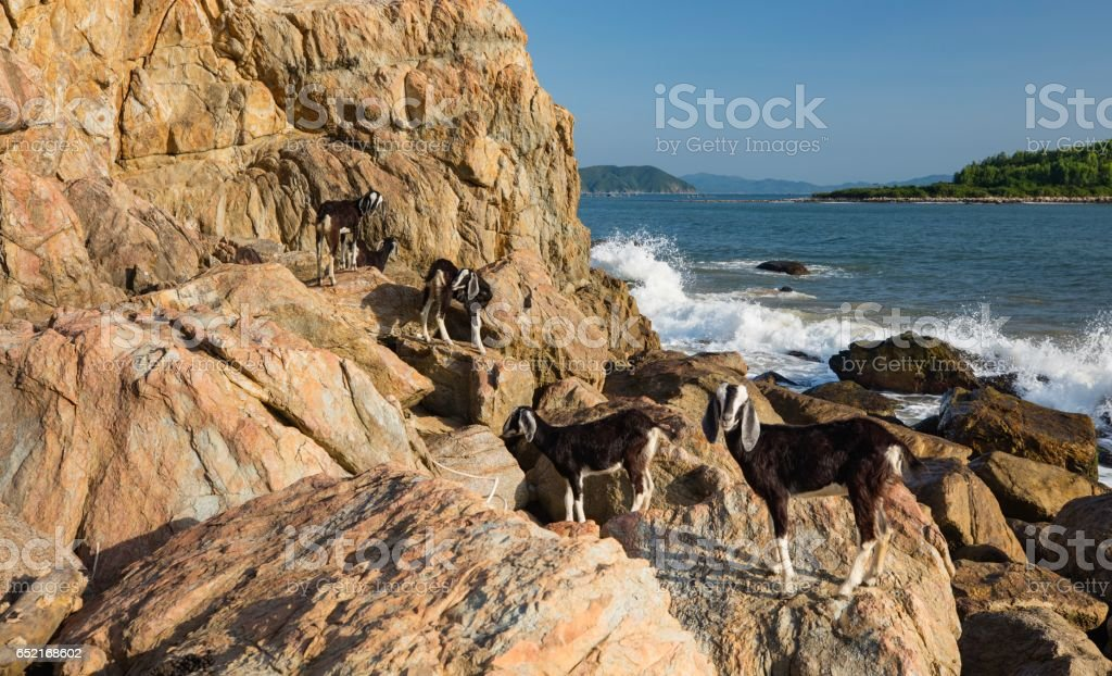 Goats On A Rocky Outcrop stock photo