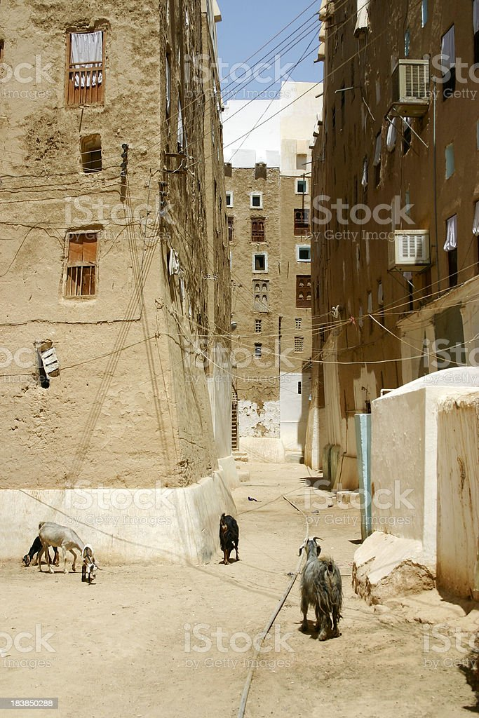 Goats on streets in Shibam royalty-free stock photo