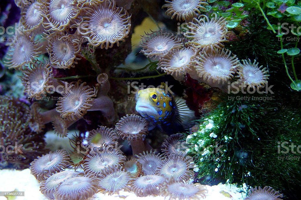 Goby and Friends stock photo