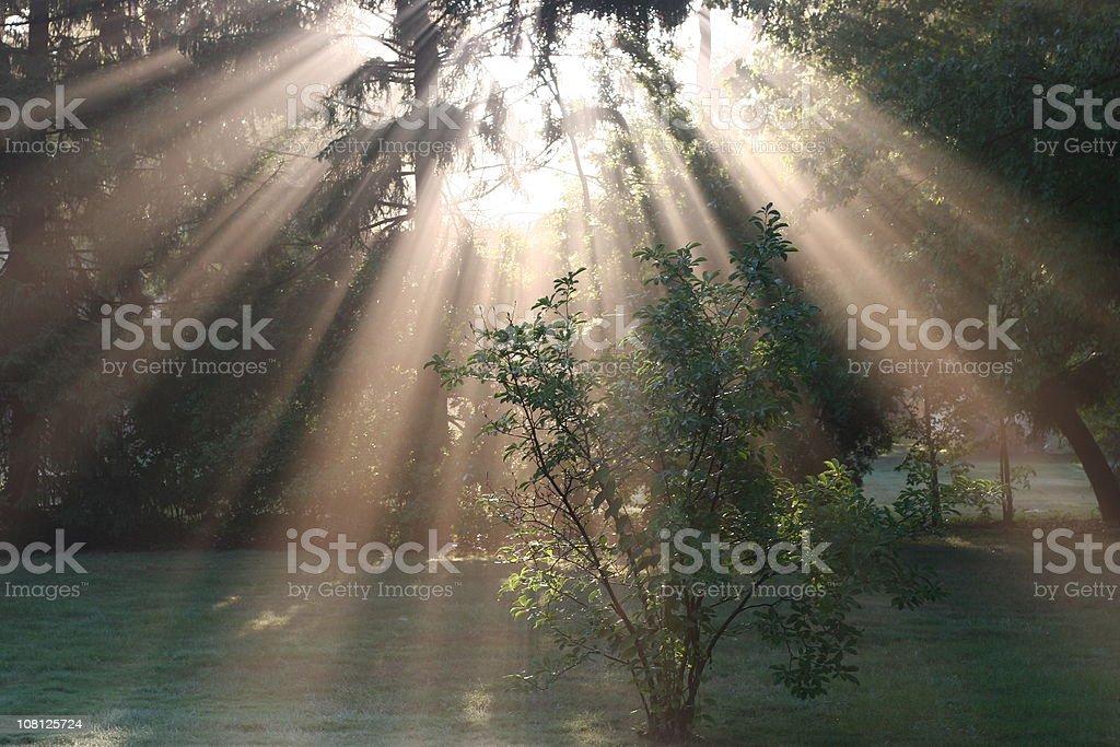 God's Love royalty-free stock photo