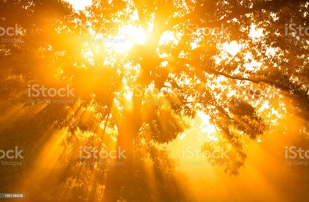 Gods Rays stock photo