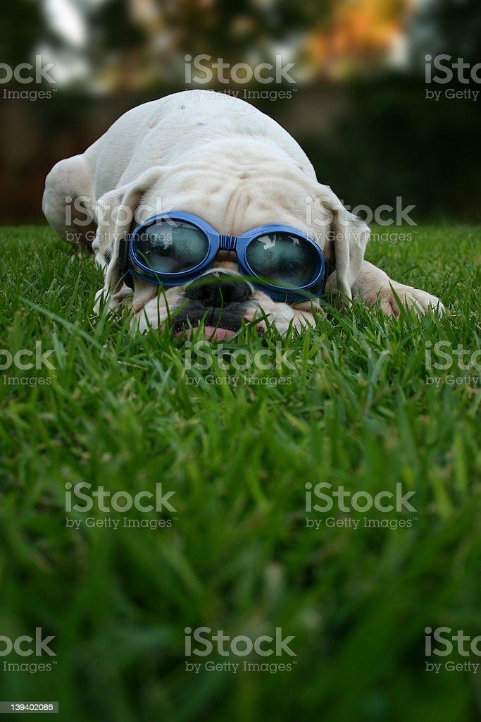 Goggles royalty-free stock photo