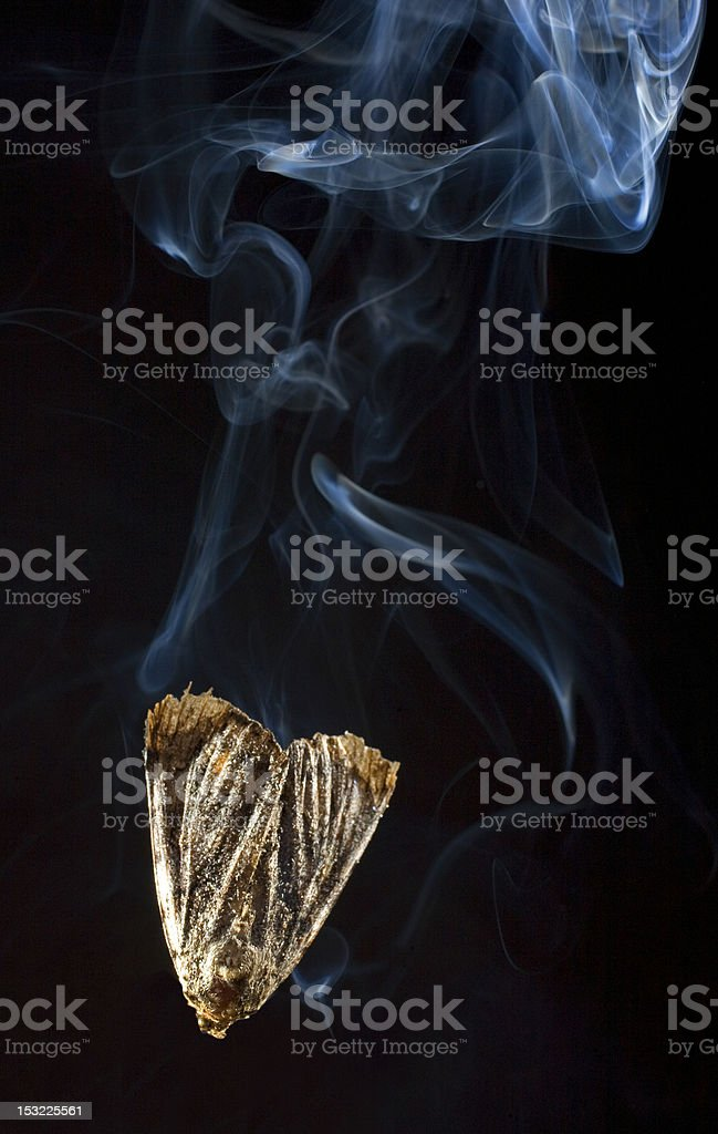 Going down in flames royalty-free stock photo