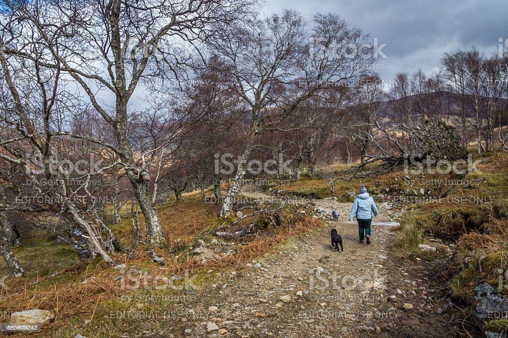 Going Downhill stock photo