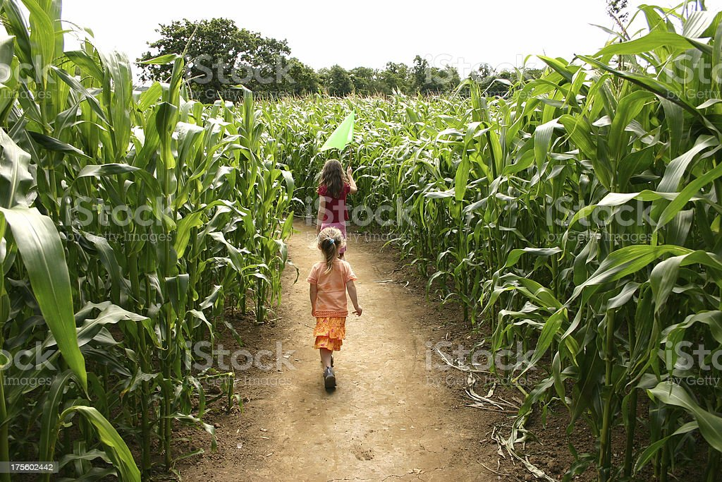 Going through the maize royalty-free stock photo
