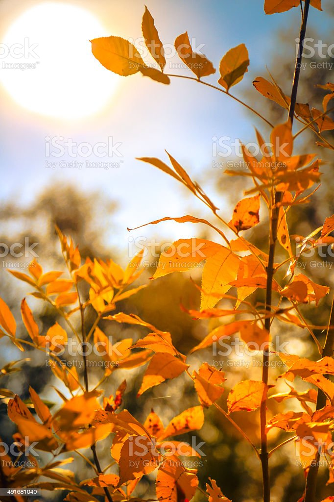 Gold Autmn foliage in a forest stock photo