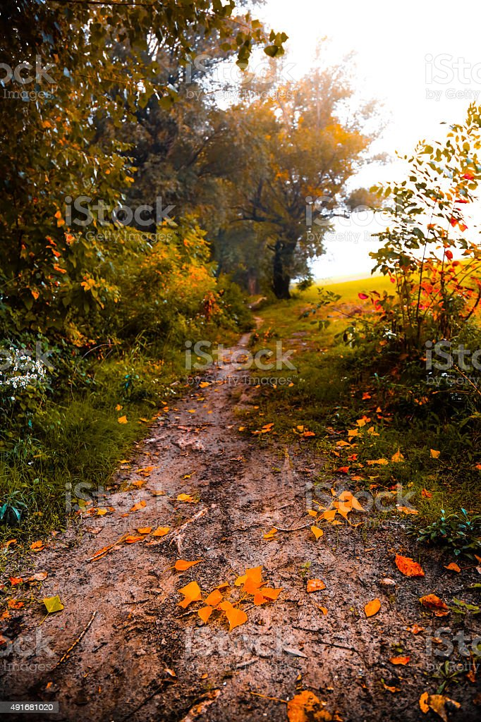 Gold Autmn leaves on a forest trail stock photo