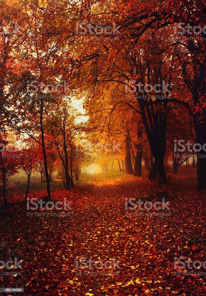 Gold autumn royalty-free stock photo