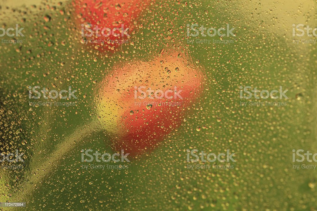 Gold Background; Tulip Reflection royalty-free stock photo