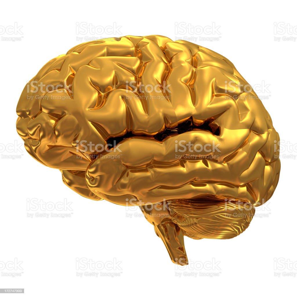 Gold brain isolated on white stock photo