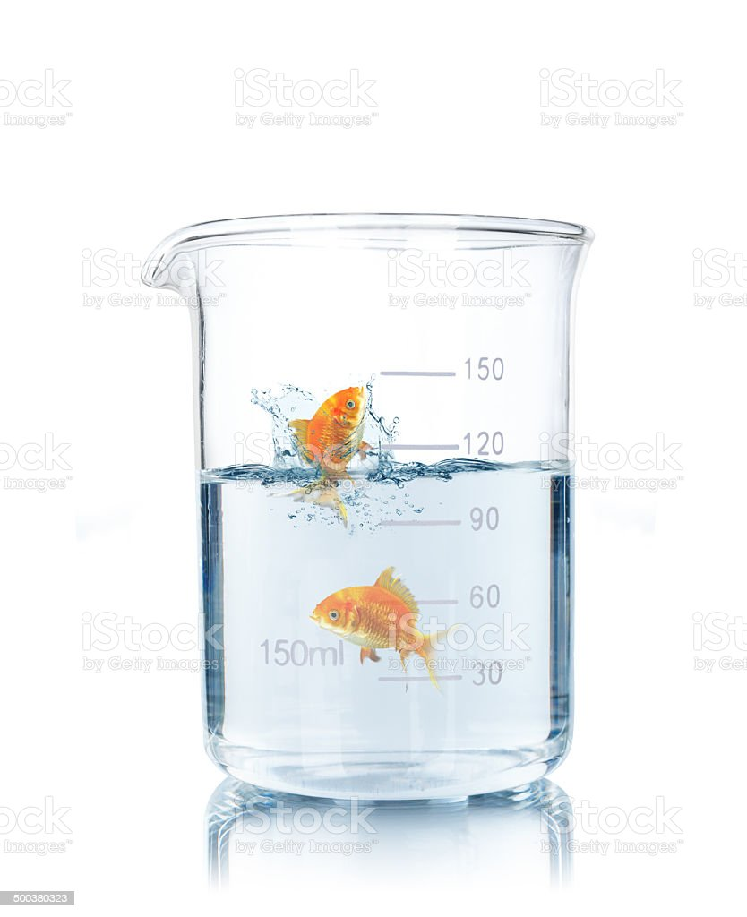 gold fish in test tube stock photo