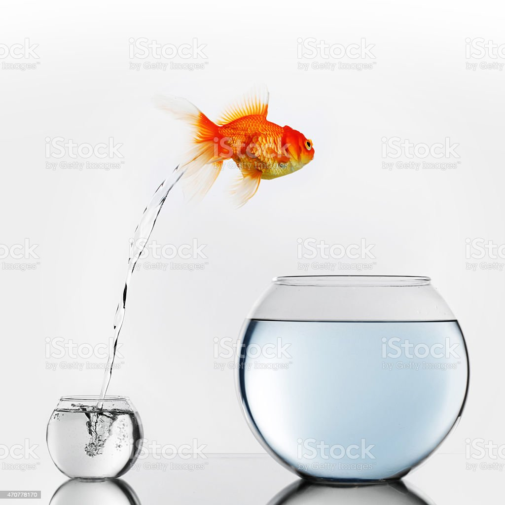 Gold fish jumping to big fishbowl stock photo