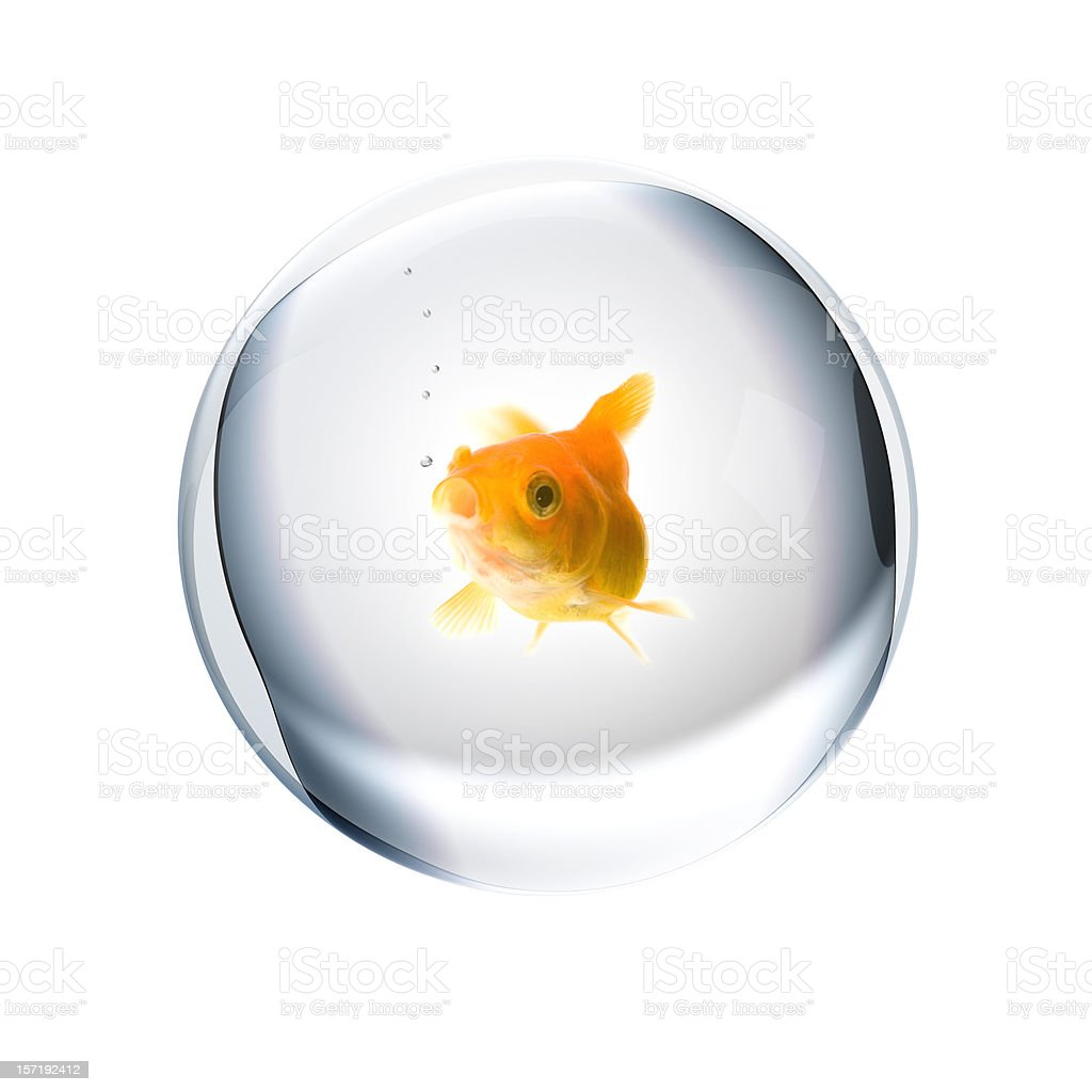 Gold Fish royalty-free stock photo