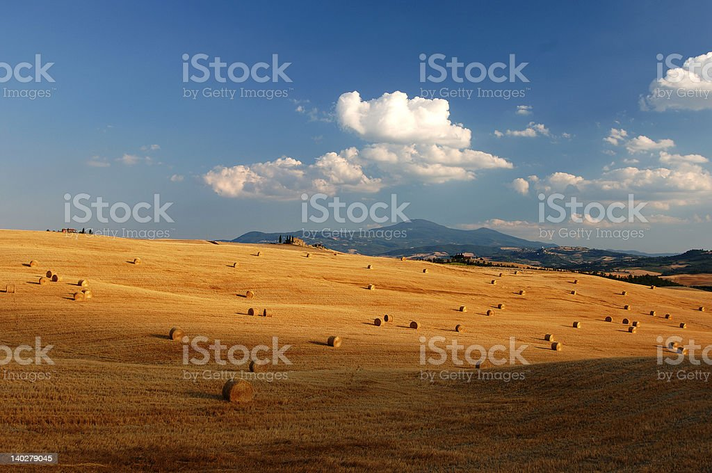 gold hills in Tuscany royalty-free stock photo