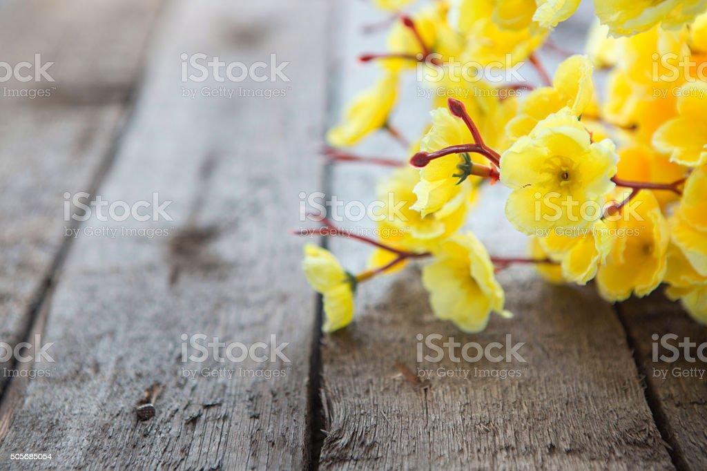 Gold leaf, sakura. Spring Blossom flowers stock photo