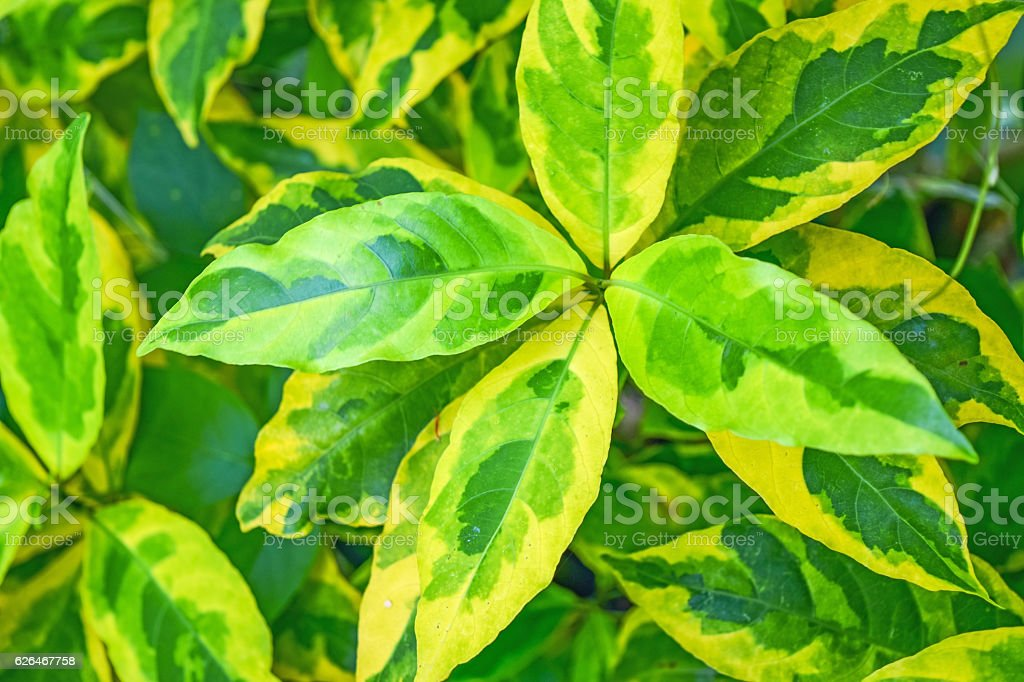 Gold leaves stock photo