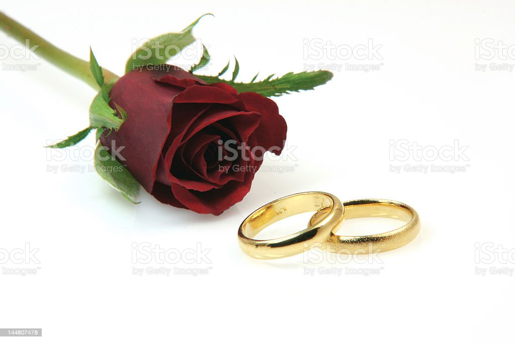 gold rings and rose royalty-free stock photo