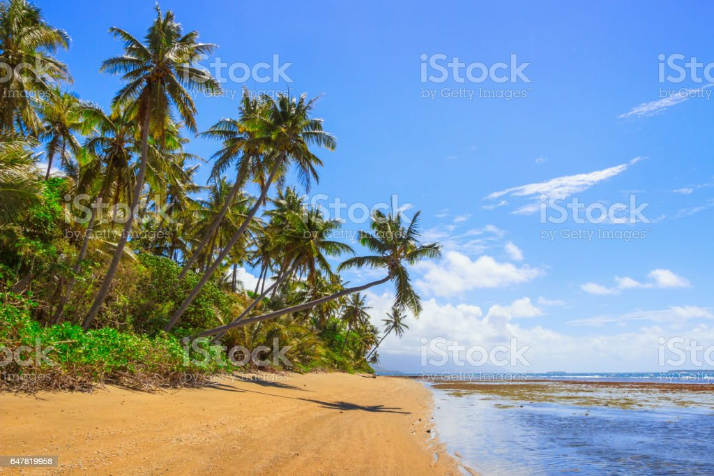 Gold sandy beach and palm trees in New Caledonia stock photo