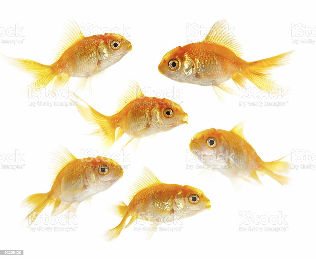 Gold small fishs stock photo