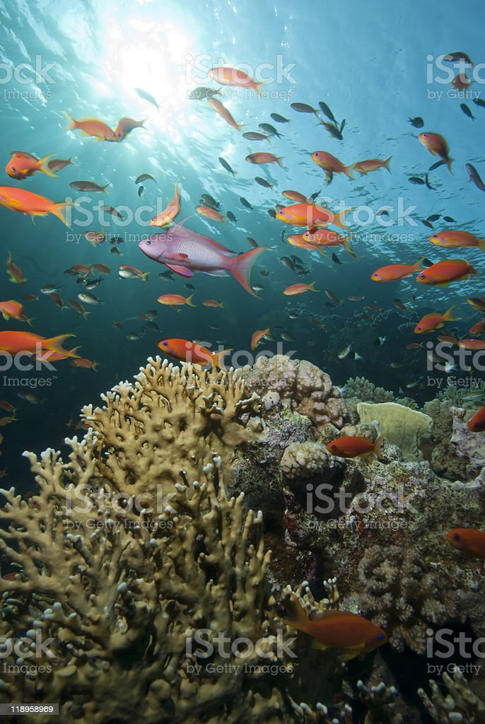 Gold tropical fish stock photo