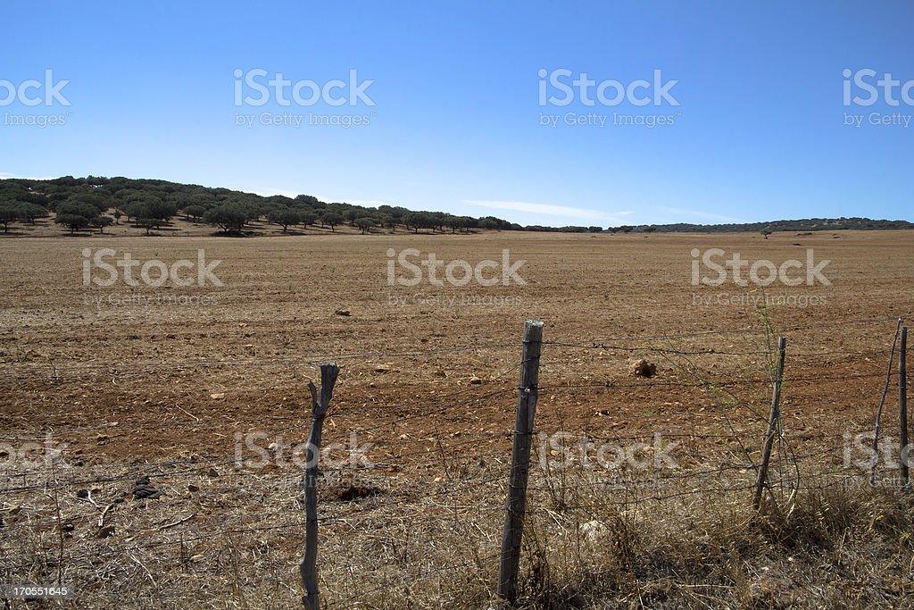 Golded Plain royalty-free stock photo