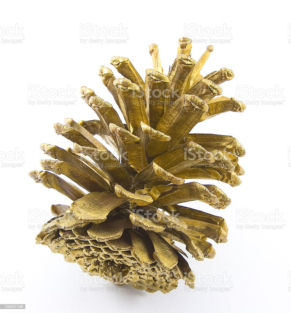 golden acorn stock photo