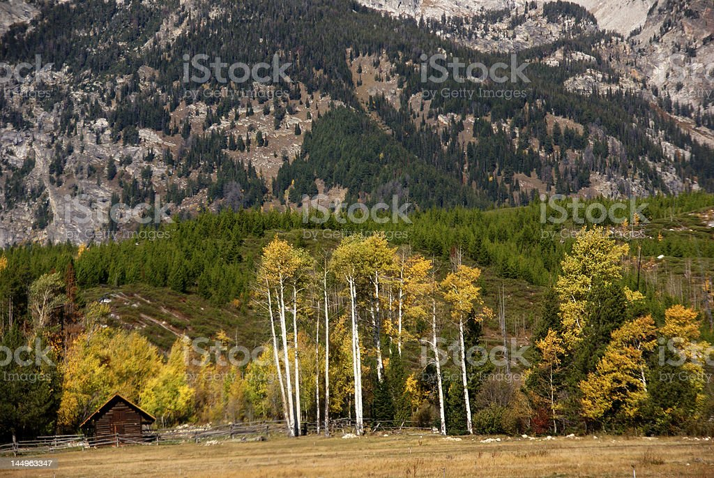 Golden aspens, with wooden shack stock photo