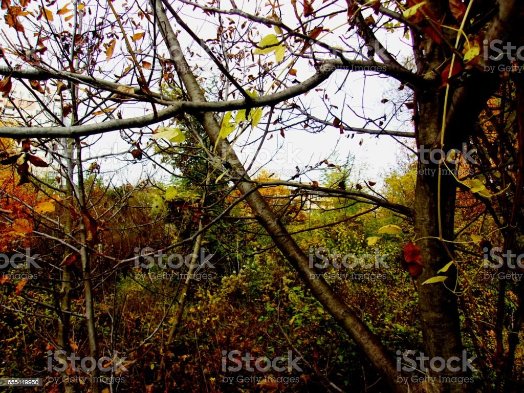 Golden autumn branches stock photo
