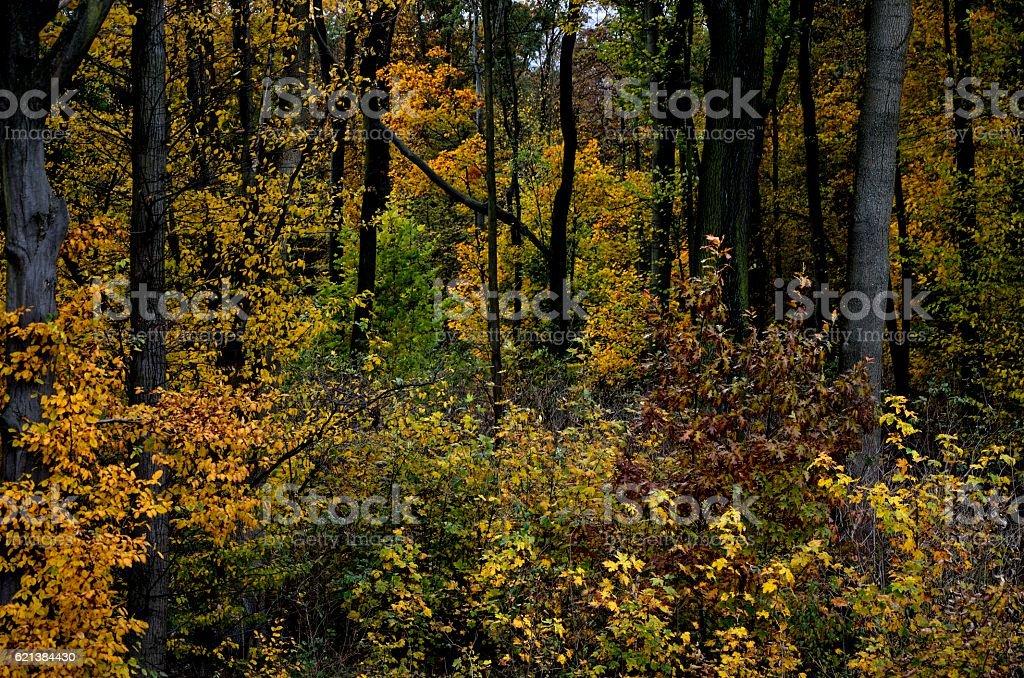 Golden autumn forest stock photo