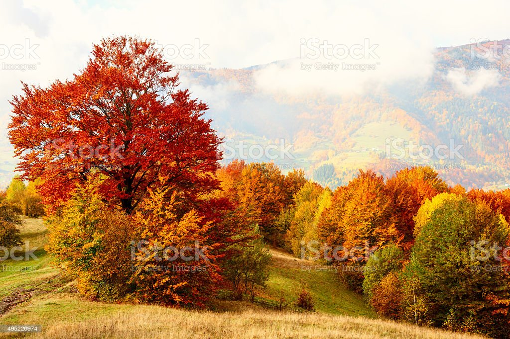 Golden autumn in the Carpathian Mountains stock photo