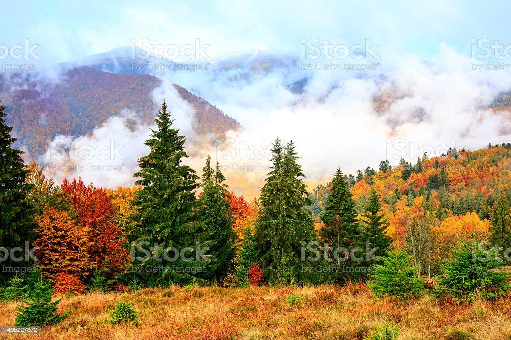 L'automne dans les montagnes Carpathian photo libre de droits