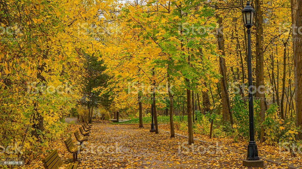 Golden autumn in the park. Alley with benches and lamps stock photo