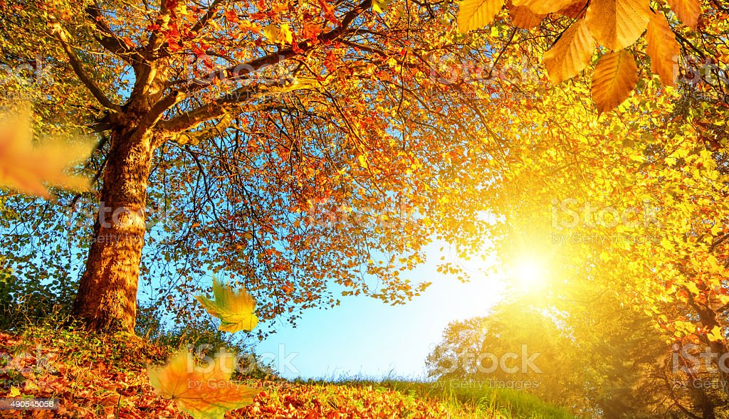 Golden autumn scenery with lots of sunshine stock photo