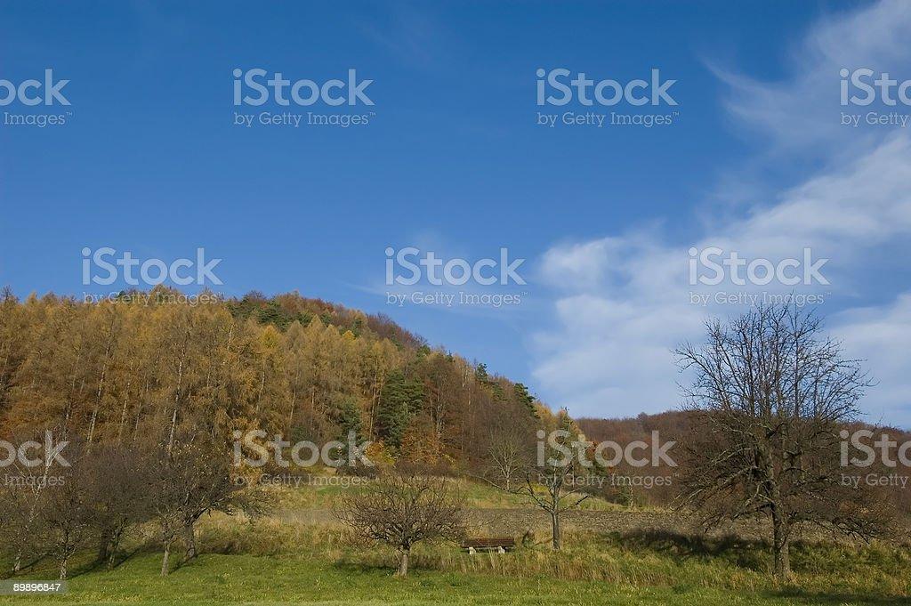 Golden Autumn Series stock photo