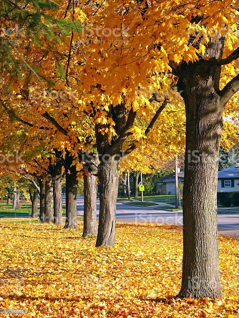 Golden Autumn Tree Row royalty-free stock photo
