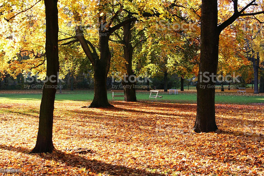 golden autumn trees royalty-free stock photo